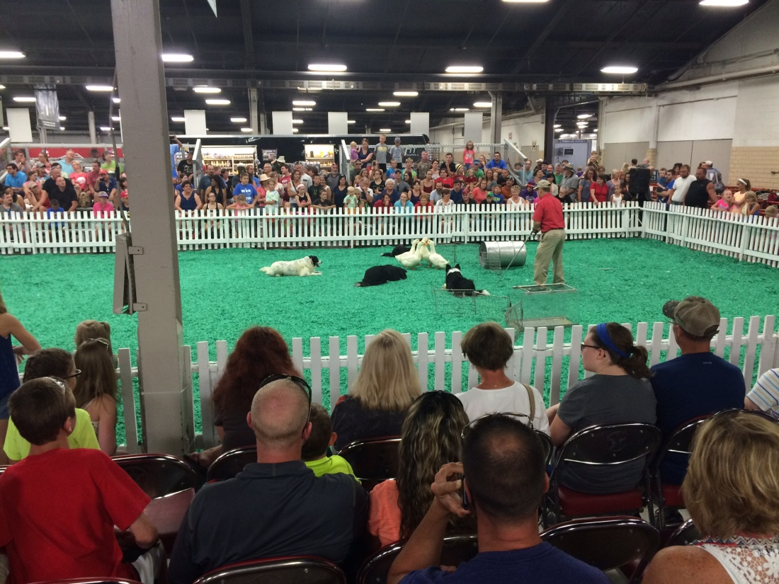 The dog show was packed, and it was only 1:30 p.m.